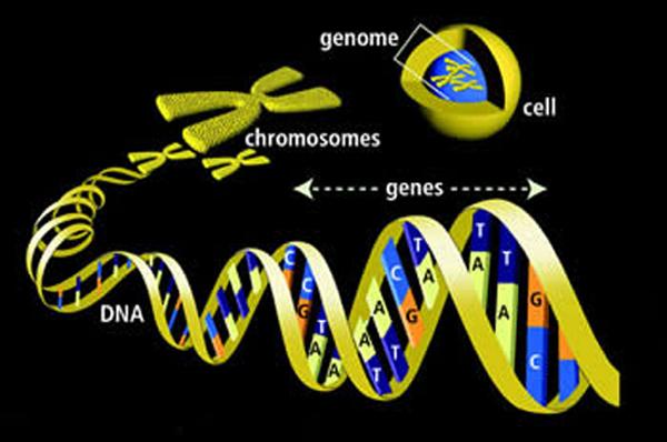 Gen-dan-Genom09