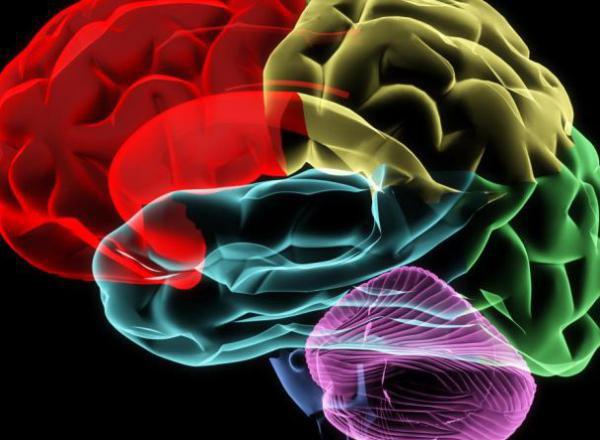 мозък 209